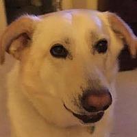 Adopt A Pet :: Sandy - Lexington, KY