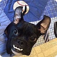 Adopt A Pet :: Icharus - Huntsville, AL