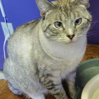 Adopt A Pet :: Raphael - Valley Falls, KS