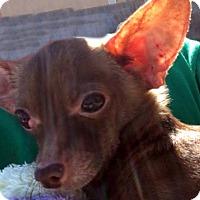 Adopt A Pet :: Lincoln - Las Vegas, NV