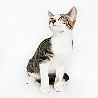 Adopt A Pet :: Kiwi - New York, NY