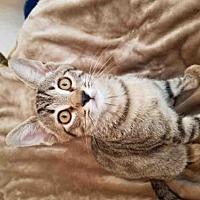 Adopt A Pet :: EMMETT - Conroe, TX