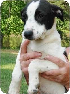Labrador Retriever Mix Dog for adoption in Wilmington, Delaware - Wendy