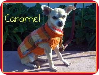 Chihuahua Dog for adoption in San Clemente, California - CARAMEL
