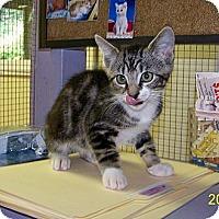 Adopt A Pet :: Leland - Dover, OH