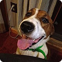 Adopt A Pet :: Gigi - Dandridge, TN