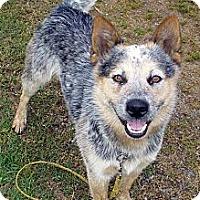 Adopt A Pet :: Brody - Siler City, NC