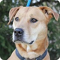 Adopt A Pet :: Sassy - Springfield, IL