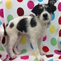 Adopt A Pet :: Scooter - Marietta, GA