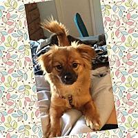 Adopt A Pet :: Bridgette - Homewood, AL