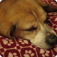 Adopt A Pet :: Nolan - Yardley, PA