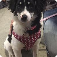 Adopt A Pet :: Nellie - Richmond, VA