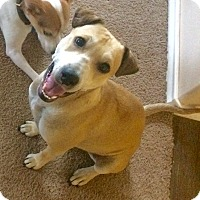 Adopt A Pet :: Ruby - Snyder, TX