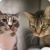 Adopt A Pet :: Miss Alley and Peanut - Staten Island, NY