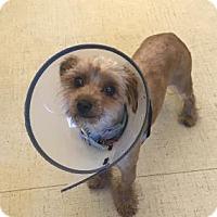 Adopt A Pet :: Joni - San Francisco, CA