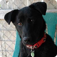 Adopt A Pet :: Levi - Newell, IA