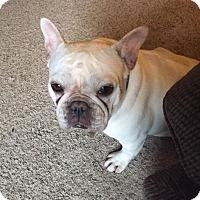 Adopt A Pet :: Coco - Columbus, OH