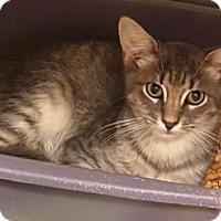 Adopt A Pet :: Yukon - Americus, GA