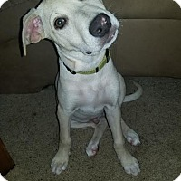 Adopt A Pet :: Bingo - DeForest, WI