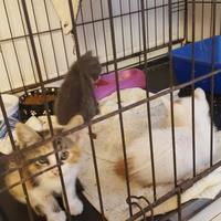 Domestic Shorthair/Domestic Shorthair Mix Cat for adoption in West Monroe, Louisiana - 36091227