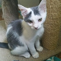 Adopt A Pet :: VAL - Clayton, NJ