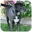 Photo 3 - Labrador Retriever Mix Dog for adoption in Berkeley, California - Loki