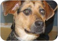 Shepherd (Unknown Type) Mix Dog for adoption in Brazil, Indiana - RUBY two shoes