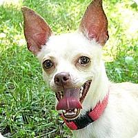 Adopt A Pet :: Ben - Mocksville, NC