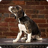 Adopt A Pet :: Virginia Wolfe - Owensboro, KY