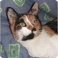 Adopt A Pet :: Rose - Jenkintown, PA