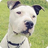 Adopt A Pet :: PETIE - Kingston, WA