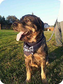 Rottweiler/Schnauzer (Standard) Mix Dog for adoption in Regina, Saskatchewan - Baxter aka Mr. B
