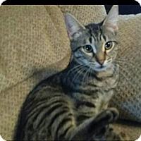 Adopt A Pet :: Evan - Columbus, GA