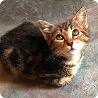 Adopt A Pet :: Sally Brown - N. Billerica, MA