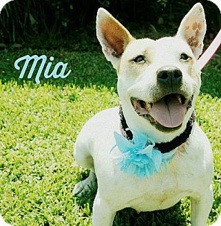 Pit Bull Terrier/Bull Terrier Mix Dog for adoption in Lake Charles, Louisiana - Mia