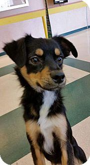 Terrier (Unknown Type, Small) Dog for adoption in Reno, Nevada - Max