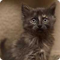 Adopt A Pet :: SophiaM - North Highlands, CA