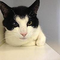Adopt A Pet :: Gem - Queenstown, MD