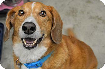 Mixed Breed (Medium) Mix Dog for adoption in Kalamazoo, Michigan - Charlie