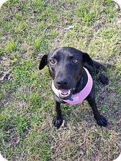 Labrador Retriever Mix Dog for adoption in Austin, Texas - Maggie Mae