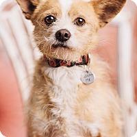 Adopt A Pet :: Hank - Portland, OR