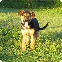 Adopt A Pet :: FLETCHER - Bedminster, NJ