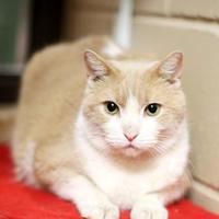 Adopt A Pet :: Hanz - Appleton, WI