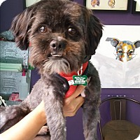Adopt A Pet :: Dustie - Thousand Oaks, CA