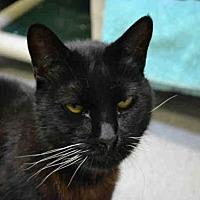 Adopt A Pet :: PECAN - Rancho Cucamonga, CA