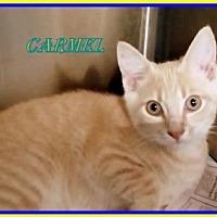 Adopt A Pet :: Carmel - Berkeley Springs, WV