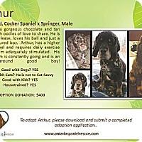 Adopt A Pet :: Arthur - Ottawa, ON