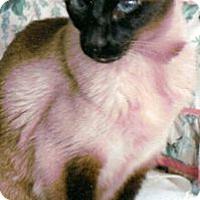 Adopt A Pet :: Sweetie Pie - Alexandria, VA