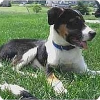 Adopt A Pet :: Jed--ADOPTED!! - Tiffin, OH