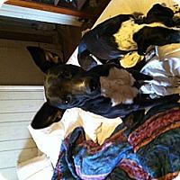 Adopt A Pet :: NYLA - Childress, TX